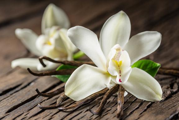 Tecnologo alimentare blog aromi vaniglia